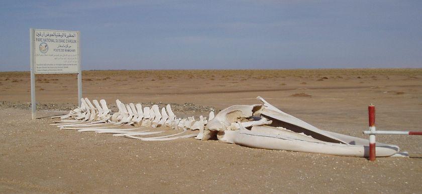Mauritanie 2004